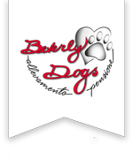 Beverly Dogs - allevamento e pensione cani